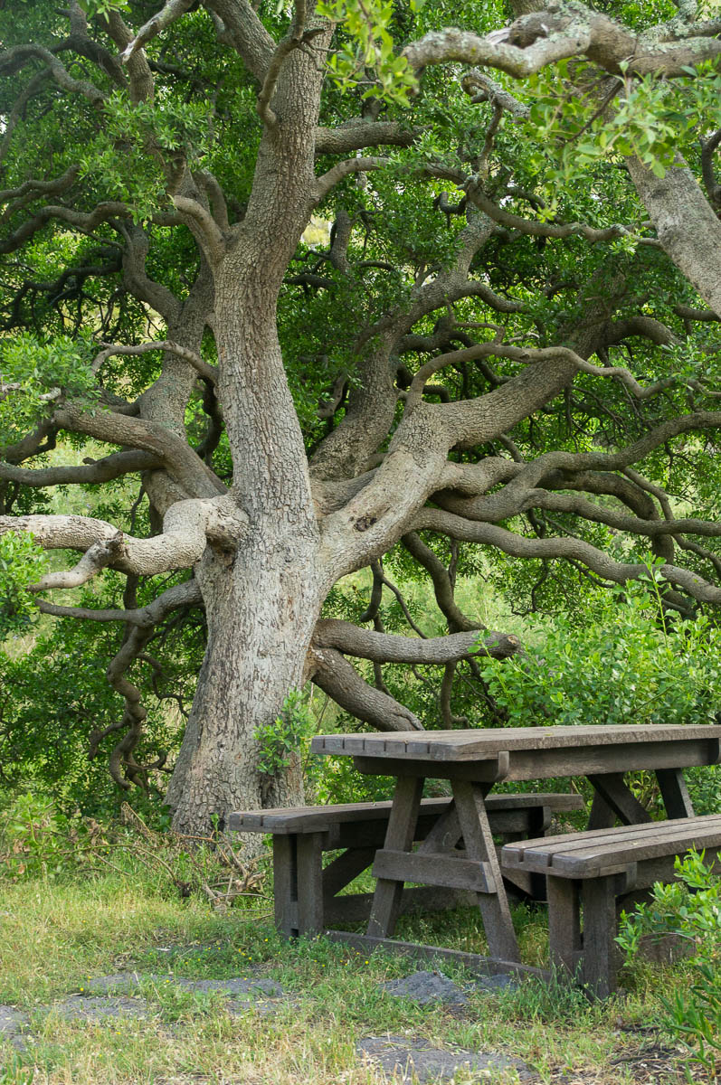 Fantastical Picnic Tree and picnic table