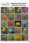 Phillipskop Plant Spotter Guide