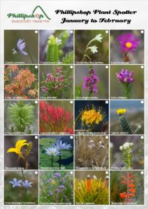 Phillipskop Plant Spotter Guide January-February