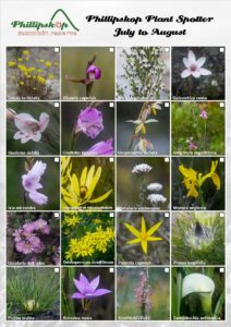 Phillipskop Plant Spotter Guide July-August