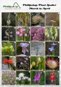 Phillipskop Plant Spotter Guide March-April