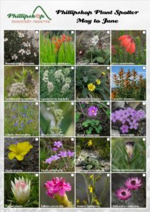 Phillipskop Plant Spotter Guide May-June