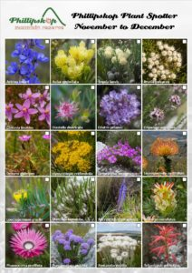 Phillipskop Plant Spotter Guide November-December