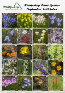 Phillipskop Plant Spotter Guide September-October